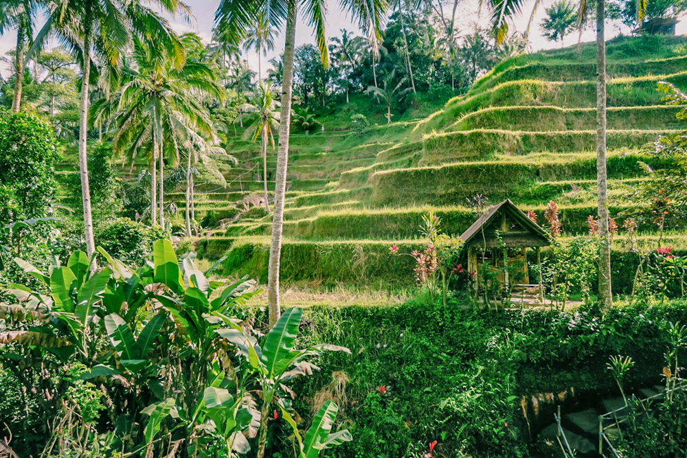 Ubud, Indonesia: Famous Tegalalang Rice Terraces