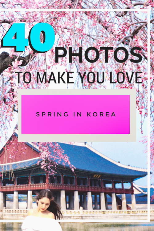Want to know the best time to visit South Korea? Our photos of Korean cherry blossom and canola flower blooms may convince you to see spring in Korea for yourself! We love visiting Seoul, Jeju, and the rest of Korea during this blossoming season, and exploring the floral-touched landscape during this time is one of the best things to do in South Korea (and definitely one of the best things to do in Seoul!)