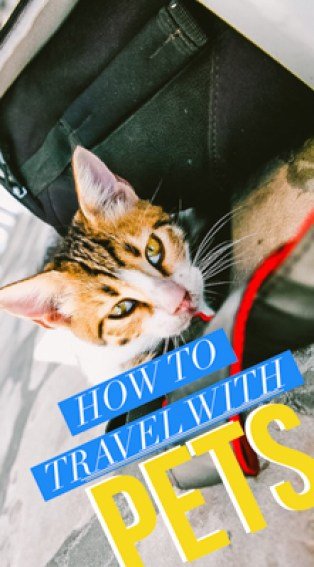 Essential information about shots, certificates, gear, pet-friendly airlines, planning, costs, & more international pet travel tips for taking pets abroad!