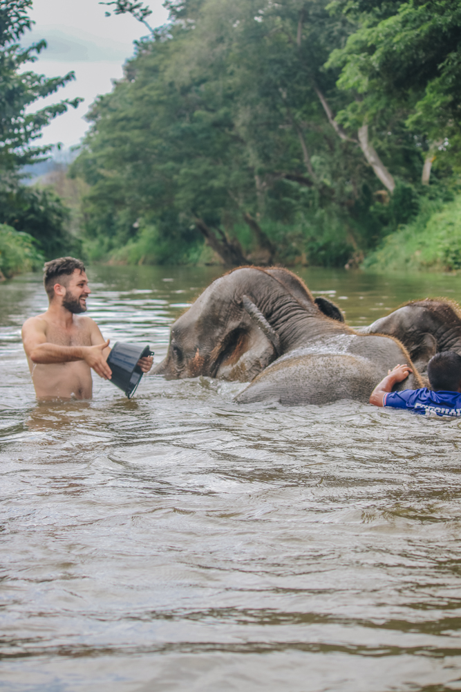 Bathing elephants in Thailand river