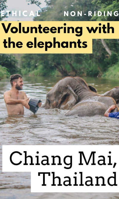We visit the best Chiang Mai elephant sanctuary (NON-RIDING!) for volunteering with Thailand elephants, including feeding, walking, and bathing them!