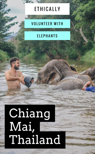 We visit the best Chiang Mai elephant sanctuary (NON-RIDING!) for volunteering with Thailand elephants, including feeding, walking, and bathing them! One of the top things to do in Chiang Mai, Thailand, and know what to expect for your Thailand trip!