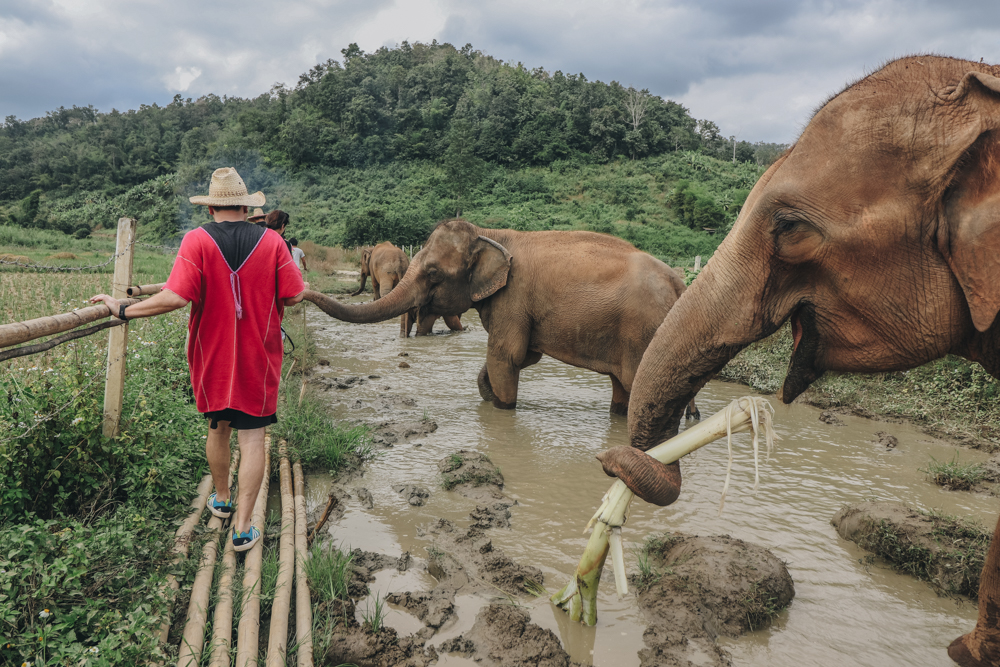 nonriding Thailand elephant care