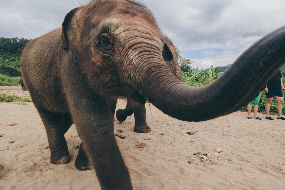 Playing with Thailand elephants in Chiang Mai