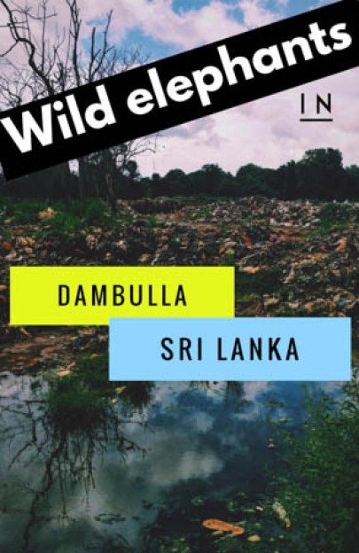 Your local's guide to finding WILD ELEPHANTS in Dambulla, Sri Lanka! A perfect way to spend time in between visiting the Lion Rock of Sigiriya!