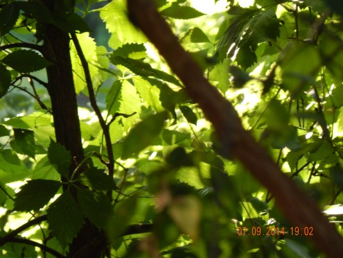Photos taken directly of the foliage of the wide Scarlet-Oak at the end of the Street also have inspiring qualities.