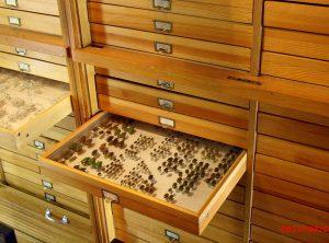 Die Käfersammlung von Ernst Jünger in Wilfingen