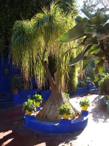 jardin majorelle3