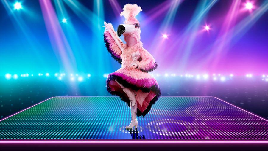 Flamingo. Picture: ©ITV/Bandicoot TV