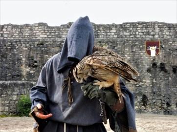 festival medieval de provins spectacle hibou