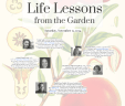 60-Life-Lessons-Flyer-10134173_113x96