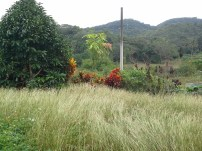 Grass offsets the tropical plant colours