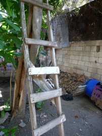 Homemade ladder against tree