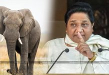 Supreme Court Gave Shock To Mayawati