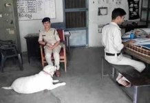 Accused Dog in Police Care