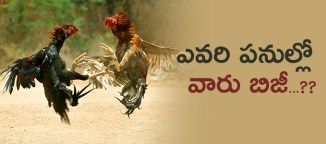 cockfithts-in-godavaridistricts
