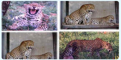 Zoos, wildlife sanctuaries to be shut in Bengal