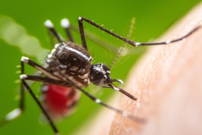 Zika Virus: Here's How You Can Prevent Foetal Damage; Know The Causes And Tips For Prevention