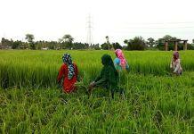 Jagan Mohan Reddy New Plan For Farmers
