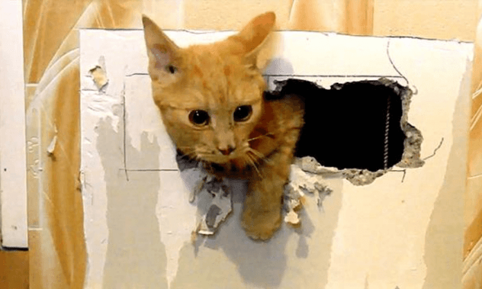 Cat mother, kitten trapped in ventilation shaft for 8 days rescued