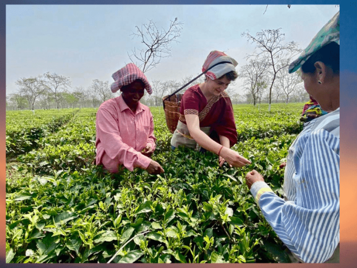 Priyanka Gandhi plucks tea leaves, interacts with tea garden workers in Assam