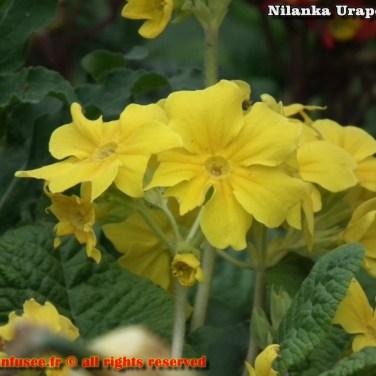 nilanka-urapelewwe-blog-voyage-france-paris-travel-blog-telunfusee-18 (2)