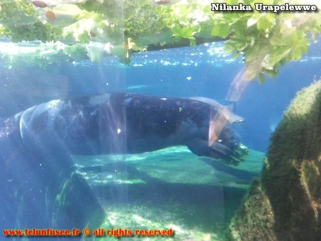 nilanka-urapelewwe-blog-voyage-france-zoo-de-vincennes-travel-blog-telunfusee-13