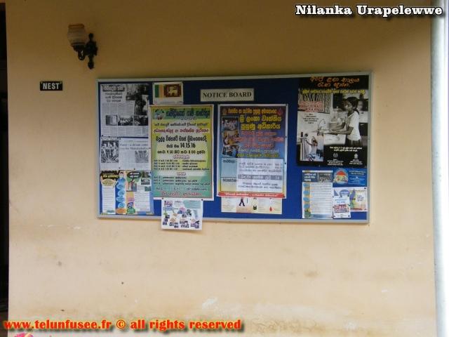 nilanka-urapelewwe-blog-voyage-sri-lanka-haldummulla-travel-blog-telunfusee-1