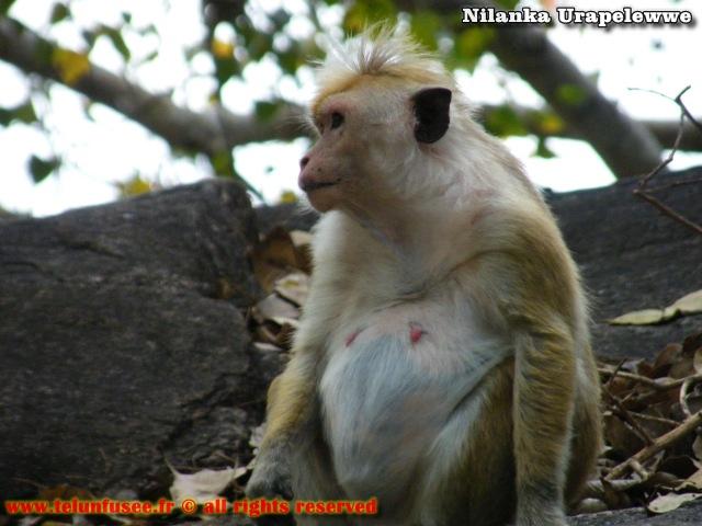 nilanka-urapelewwe-blog-voyage-sri-lanka-mihintale-travel-blog-telunfusee-1