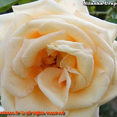nilanka-urapelewwe-blog-voyage-sri-lanka-welimada-travel-blog-telunfusee-3