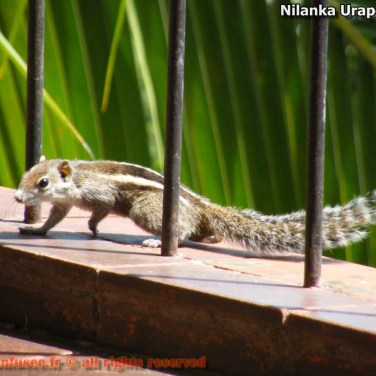 nilanka-urapelewwe-blog-voyage-sri-lanka-welimada-travel-blog-telunfusee-45