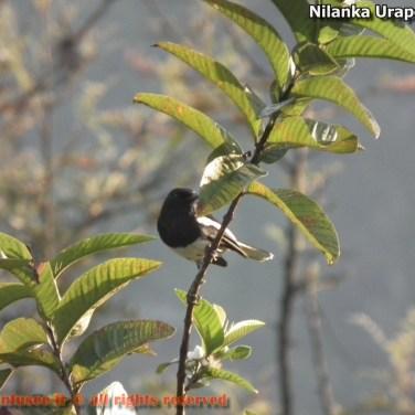 nilanka-urapelewwe-blog-voyage-sri-lanka-welimada-travel-blog-telunfusee-62