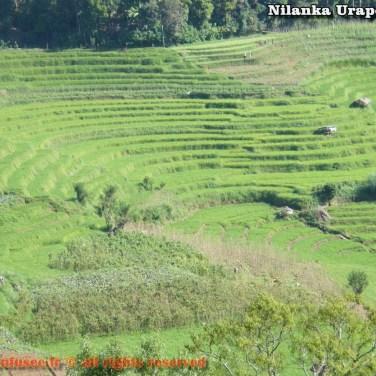 nilanka-urapelewwe-blog-voyage-sri-lanka-welimada-travel-blog-telunfusee-68