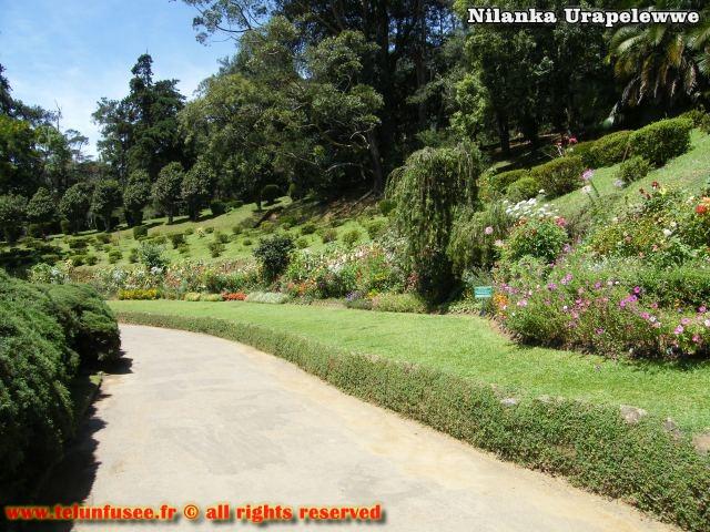nilanka-urapelewwe-blog-voyage-srilanka-hakgala-garden-nuwara-eliya-travel-blog-telunfusee-1