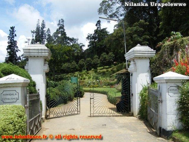 nilanka-urapelewwe-blog-voyage-srilanka-hakgala-garden-nuwara-eliya-travel-blog-telunfusee-15