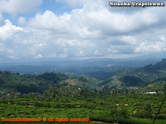 nilanka-urapelewwe-blog-voyage-srilanka-hakgala-garden-nuwara-eliya-travel-blog-telunfusee-17
