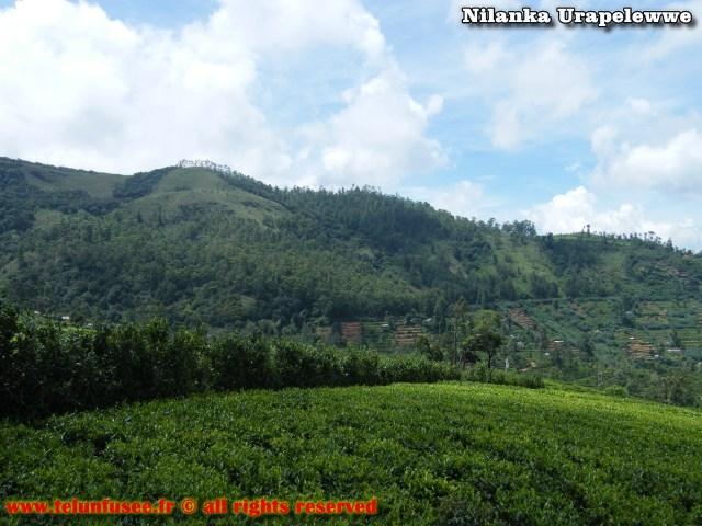 nilanka-urapelewwe-blog-voyage-srilanka-hakgala-garden-nuwara-eliya-travel-blog-telunfusee-18