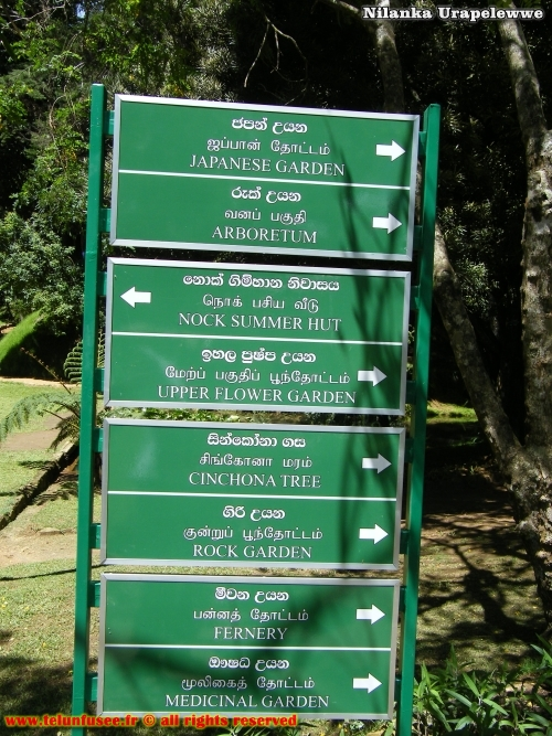 nilanka-urapelewwe-blog-voyage-srilanka-hakgala-garden-nuwara-eliya-travel-blog-telunfusee-3