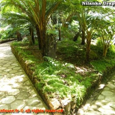 nilanka-urapelewwe-blog-voyage-srilanka-hakgala-garden-nuwara-eliya-travel-blog-telunfusee-59