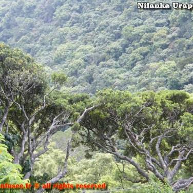 nilanka-urapelewwe-blog-voyage-srilanka-hakgala-garden-nuwara-eliya-travel-blog-telunfusee-82