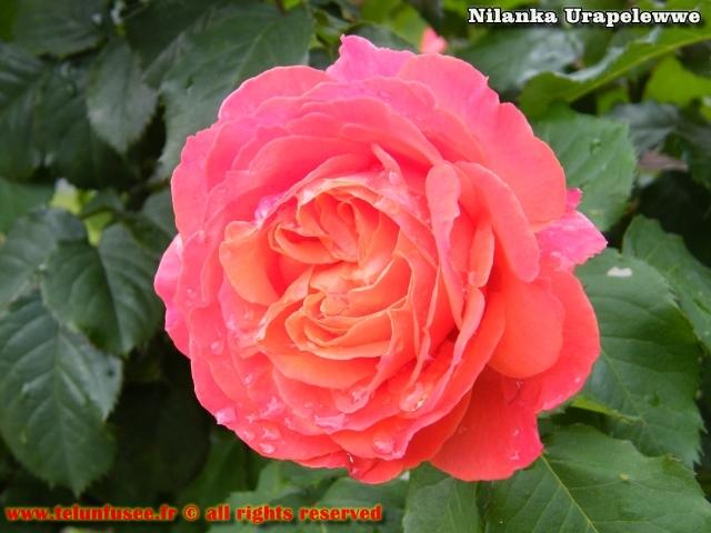nilanka-urapelewwe-blog-voyage-france-ile-de-france-bois-colombes-travel-blog-telunfusee-13