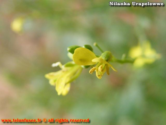 nilanka-urapelewwe-blog-voyage-sri-lanka-adisham-bunglow-travel-blog-telunfusee-8