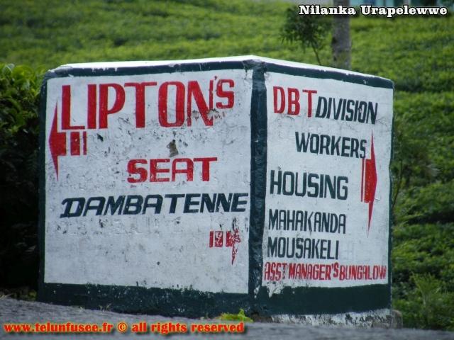 nilanka-urapelewwe-blog-voyage-sri-lanka-dambethanna-liptons-seat-travel-blog-telunfusee-1