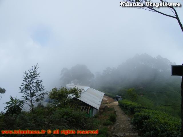 nilanka-urapelewwe-blog-voyage-sri-lanka-dambethanna-liptons-seat-travel-blog-telunfusee-10