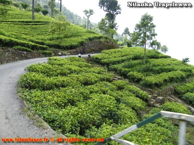 nilanka-urapelewwe-blog-voyage-sri-lanka-dambethanna-liptons-seat-travel-blog-telunfusee-3
