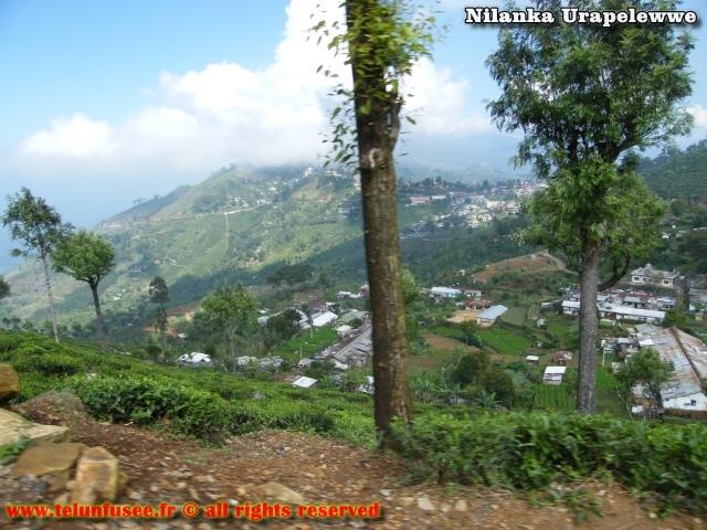 nilanka-urapelewwe-blog-voyage-sri-lanka-haputale-travel-blog-telunfusee-3