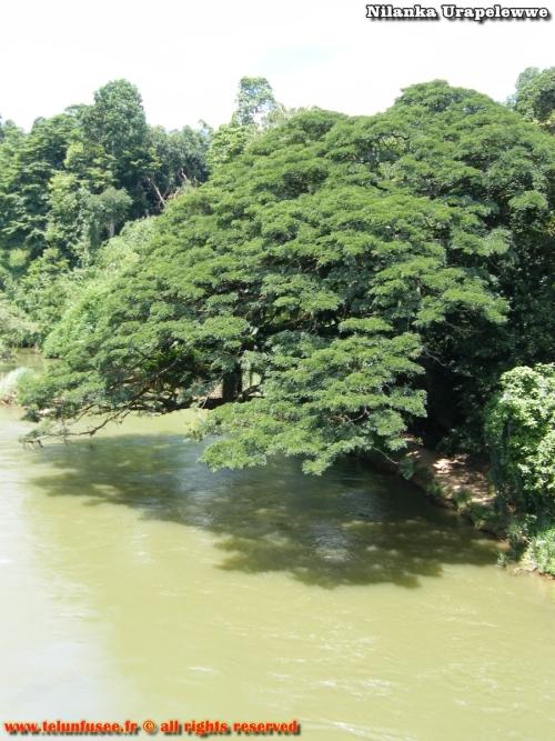 nilanka-urapelewwe-blog-voyage-sri-lanka-kandy-travel-blog-telunfusee-27