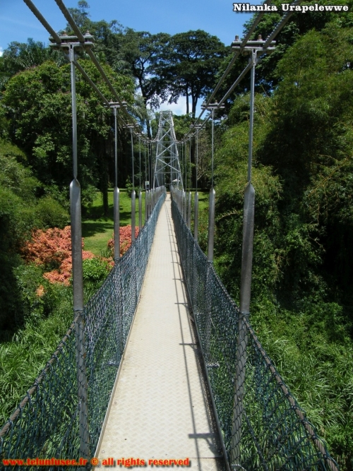 nilanka-urapelewwe-blog-voyage-sri-lanka-kandy-travel-blog-telunfusee-28