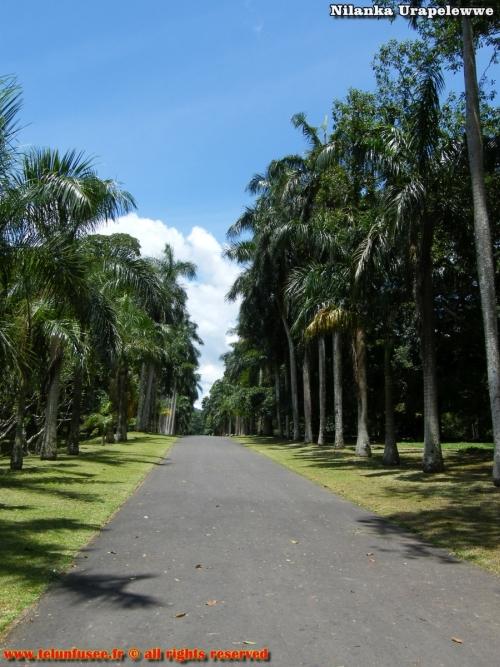 nilanka-urapelewwe-blog-voyage-sri-lanka-kandy-travel-blog-telunfusee-29