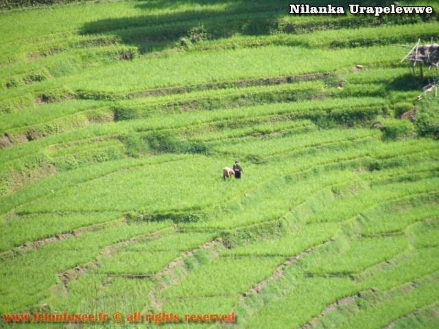 nilanka-urapelewwe-blog-voyage-sri-lanka-welimada-travel-blog-telunfusee-18